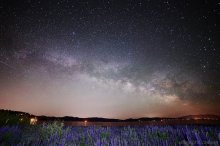Milky Way over the Lupines - Lake Tahoe (1 of 2) 06/12/2015