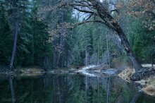 Perfect Reflections on the Merced River, Yosemite